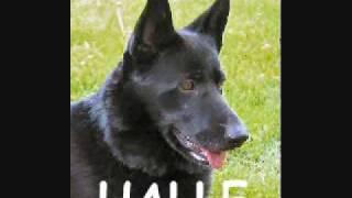Happy Endings Part 6-german Shepherd Rescue