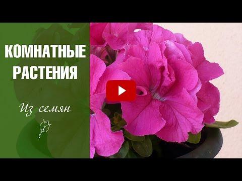 Растения для офиса - vip-