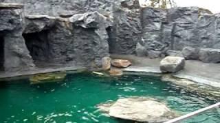 Steller Sea Lion Feeding Part 1