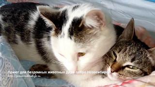 Это настоящая кошачья любовь и они так спят Дарят нежность и тепло друг другу