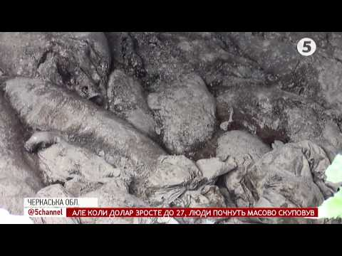 """""""Чиї свині?"""": одразу 2 незаконних скотомогильники виявили у лісосмузі на Черкащині"""
