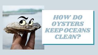 Oysters Help Keep Oceans Clean! | Mission Unstoppable