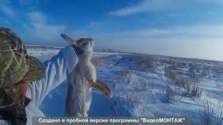 Охота зайца на 2016 в Казахстане
