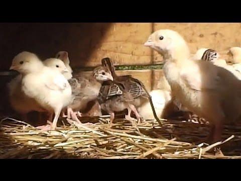 Bath City Farm: The Story So Far