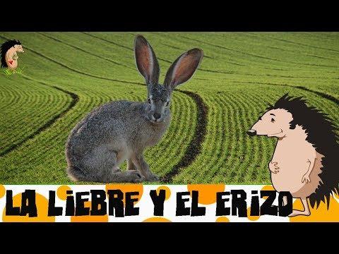 cuento-infantil-narrado-en-español-la-liebre-y-el-erizo-de-los-hermanos-grimm