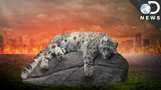 What's The Best Way To Stop Mass Extinction?
