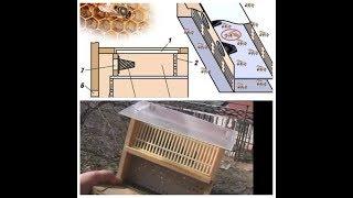 Матка уловитель при роение пчел