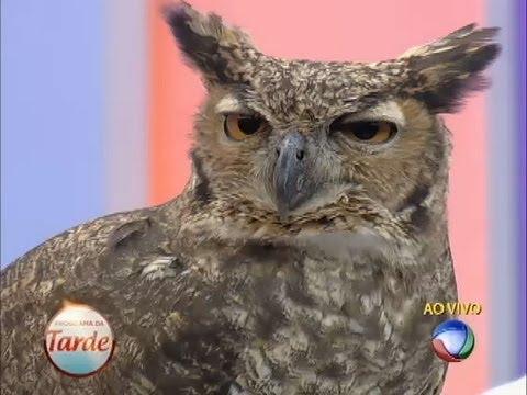 Natureza Selvagem: Aves De Rapina Invadem O Palco Do Programa Da Tarde