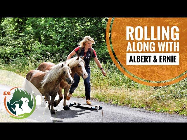Skateboarding along with Albert & Ernie (Miniature Ponies)