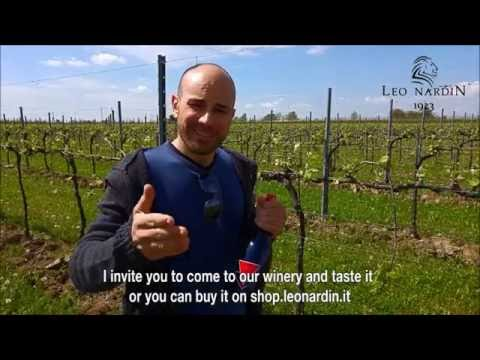 What Kind Of Wine Is Spumante? - YouTube