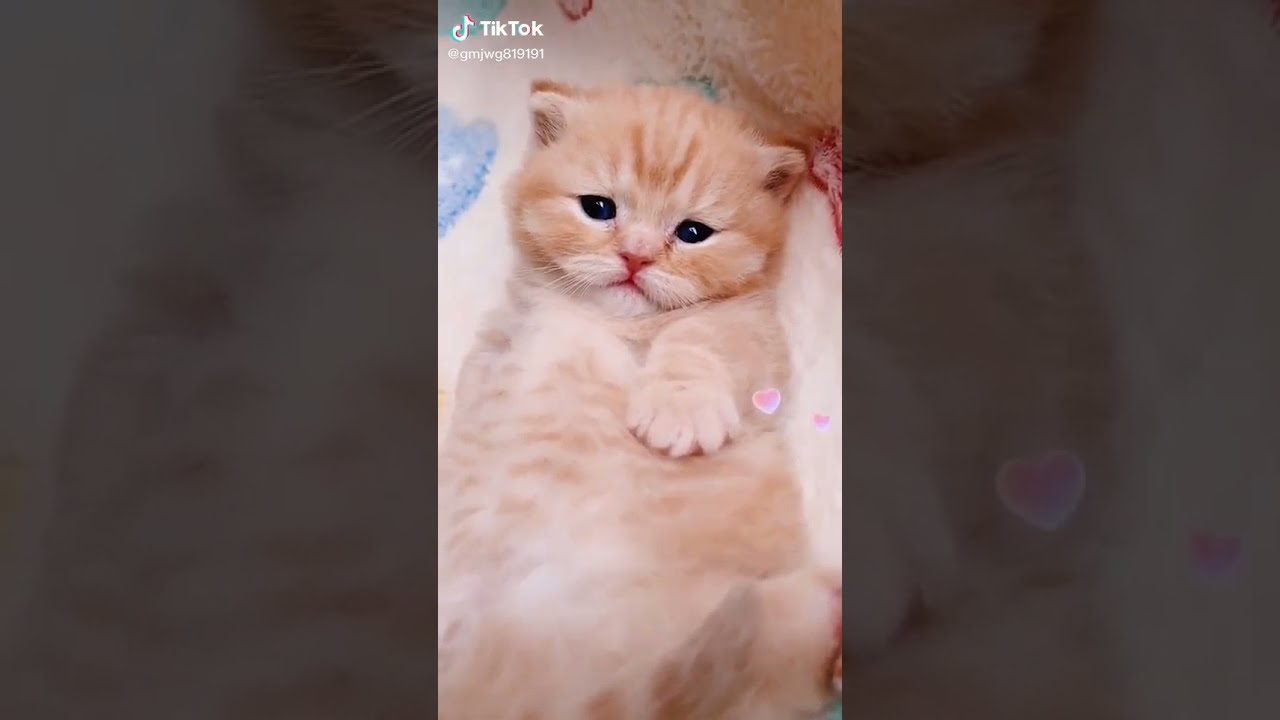 cute Animals - Animals SOO Cute Just a relaxing video #32 - shorts