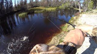Рыбалка на красивой северной реке Захотелось щуки жаренной