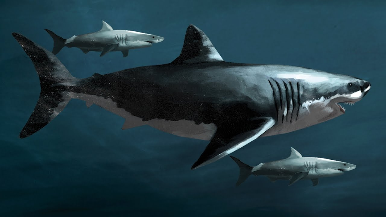Know Your Ancient Sharks! Megalodon: Fact And Fiction | SHARK WEEK - YouTube