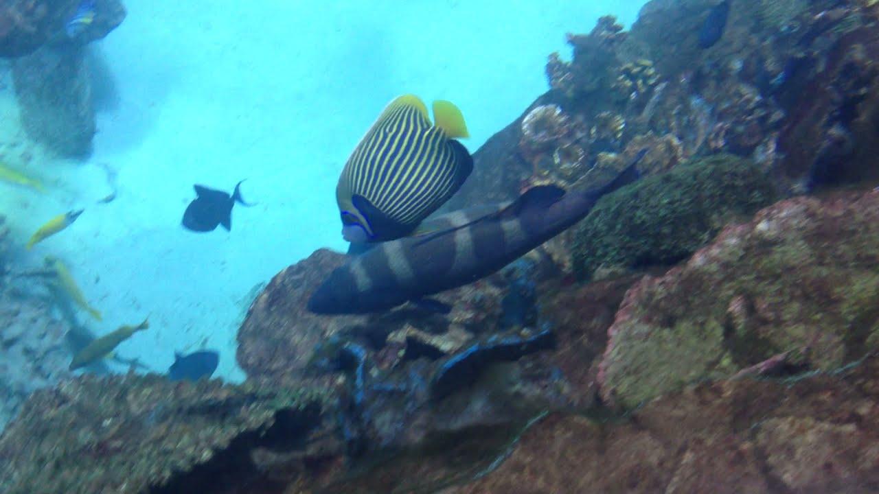 Большой Морской Аквариум с акулами,) Рыба ангел и групер)