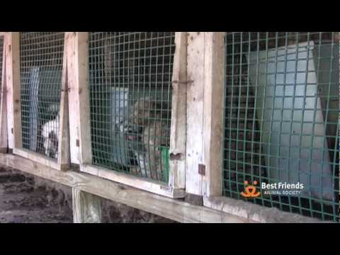 The Truth About Puppy Mills & Pet Stores