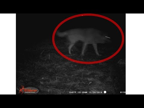 Crazy Wild Things Caught On Trail Camera!