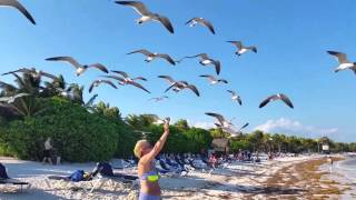 Seagull Poops on Woman