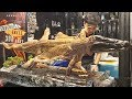 Whole Crocodile Cut and Grilled. Thai Exotic BBQ. Street Food in Phuket, Thailand