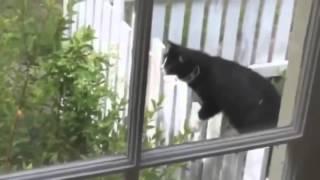 Новые приколы с кошками 2015  Смешное видео с животными