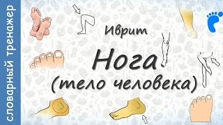 Тело человека на иврите. Нога || crazylink.ru