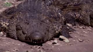 Die 10 gefährlichsten Wassertiere der Welt
