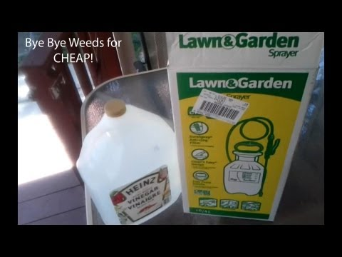 Kill weeds on driveway and between walkways for cheap