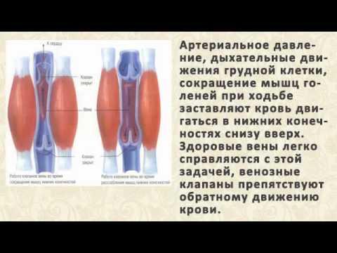 Как разжижать кровь в -