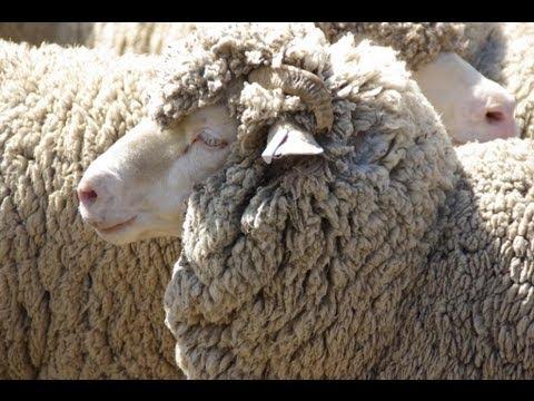 Gold Creek Sheep Station Canberra - TravelMovies