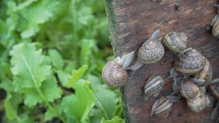 Hodowla ślimaków w Polsce