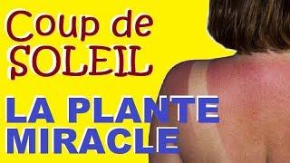 COUP DE SOLEIL : La Plante INCROYABLE Qui Calme Les Brulures En Une Heure