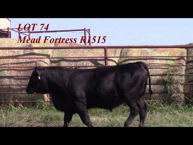 Mead Angus Lot 74