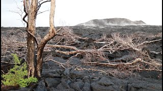 Nearly one year after the Kilauea eruption claimed over 700 homes