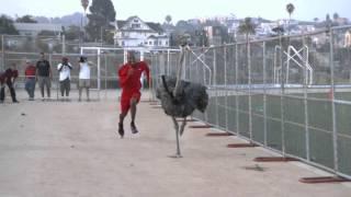 Run vine; Run bird, run - (Awolnation - Run)