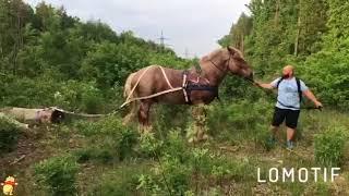 Самый большой конь! Советский тяжеловоз. Между нами тает лед.