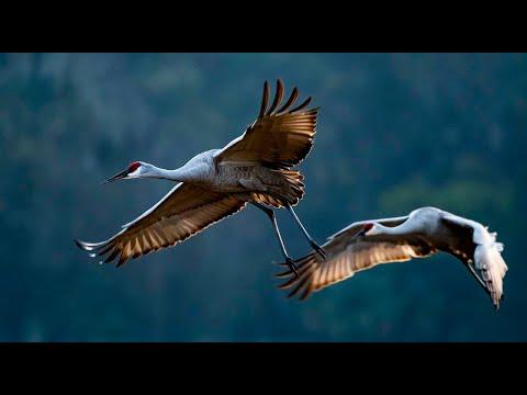 Expedition Florida: Birding in North Central Florida
