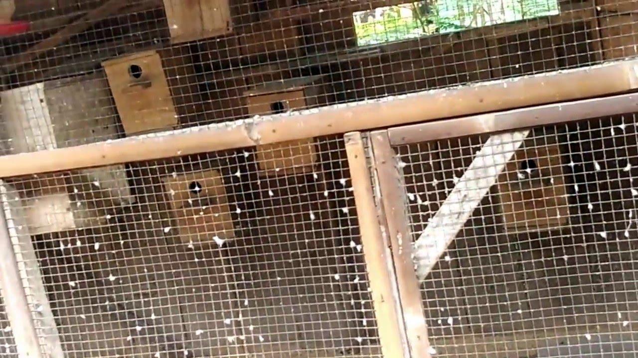 cara membuat kandang penangkaran burung parkit 01 - YouTube