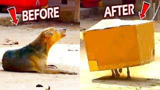 Best Funny Dog Prank Fail Inside BIG BOX - Must Watch Most Funny Comedy Video - Try To Stop Laugh