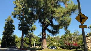 Take a tour of the Trousdale Estates area in the City of Beverly Hills 90210 with Christophe Choo