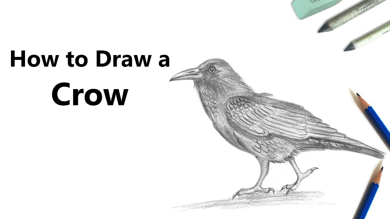 How to draw a crow with pencil time lapse