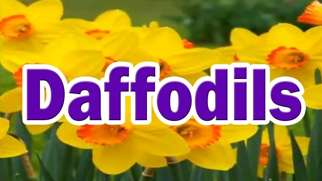 Daffodils Youtube