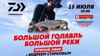 Daiwa Андрей Старков Большой голавль Большой реки