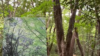 서귀포 자연휴양림