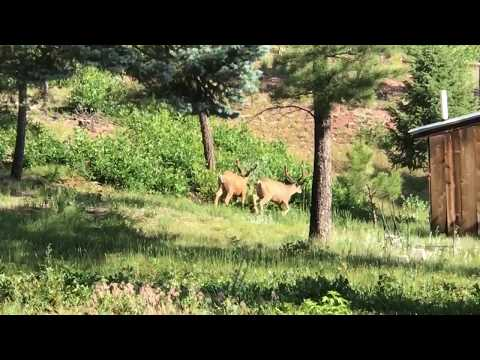 Introduction to Black Bear Forge, Beulah Colorado