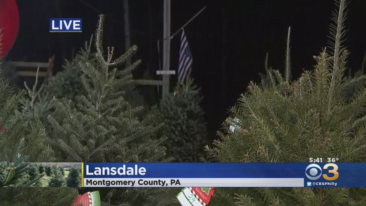 Bustard's Christmas Trees In Lansdale
