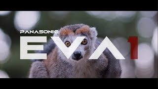 "PANASONIC EVA1 "" THE SILENCE OF ANIMALS """