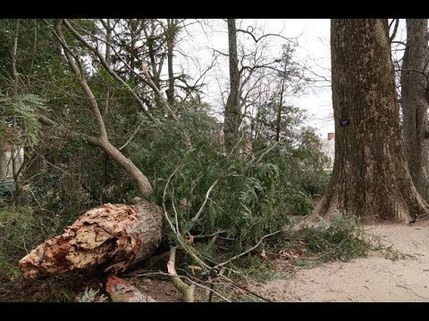 George Washington's Trees Falling!  Isaiah 10 Judgment Coming!