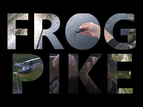 Topwater Frog Pike Fishing! | Fish jumps OUT of the water for lure!!!