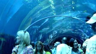2011,06,12:ジョージア水族館(アトランタ)
