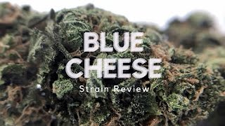 Blue Cheese Strain Review
