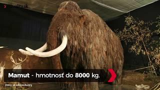 Rekordéri živočíšnej ríše, ktorí žili na území Slovenska